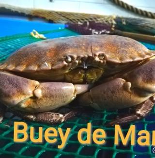 Comprar Buey de mar a domicilio al mejor precio online, económico y barato. Primera y máxima calidad